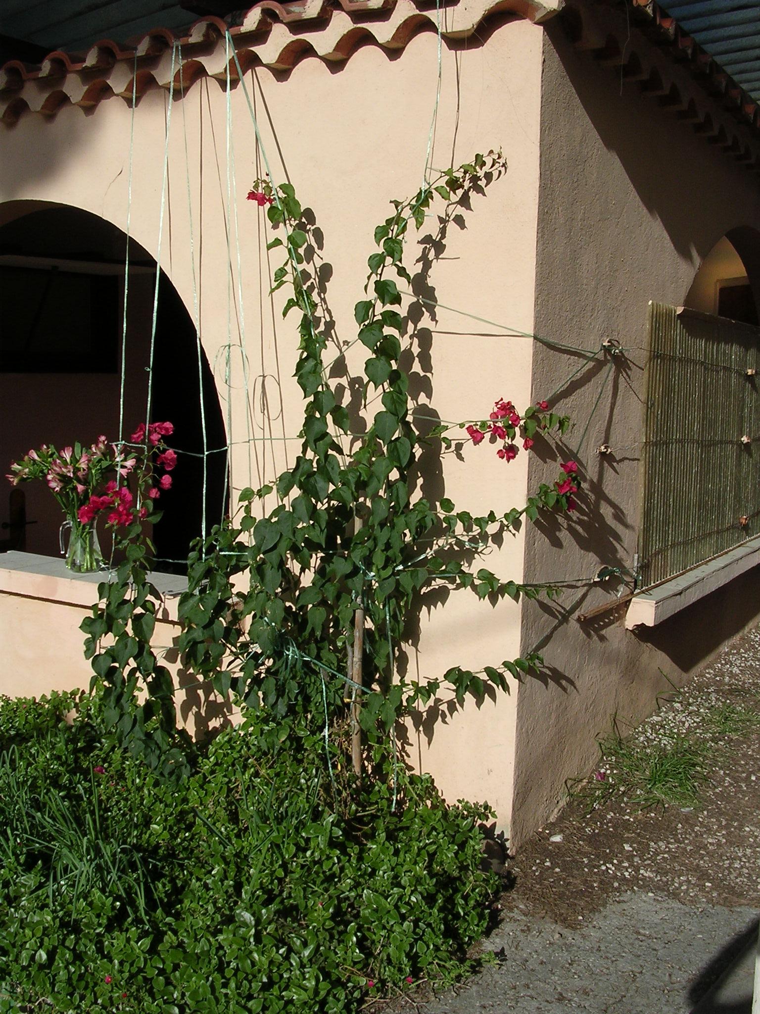 Unique Provence style bungalow for rent